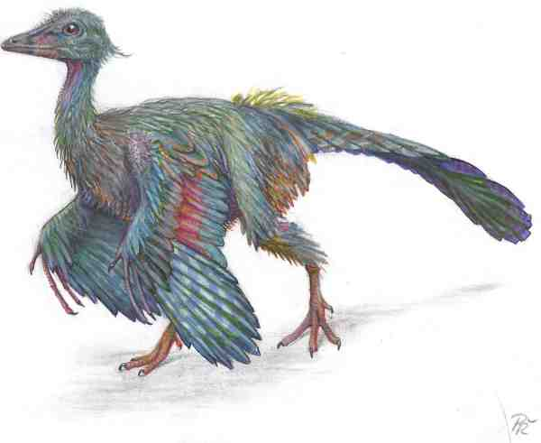 Archaeopteryx%20small.jpg